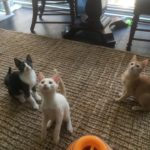 Walter, Oliver, and Pumpkin