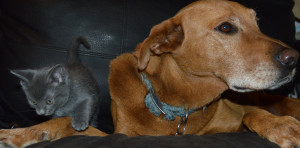 Buster & Kitty_6