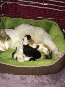 Holly Golightly and her 4 babies