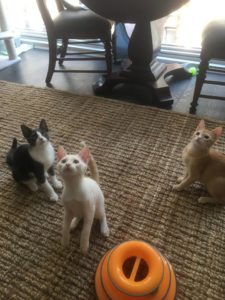 Walter, Oliver, and Pumpkin8